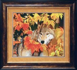 Wolf - Charivna Mit