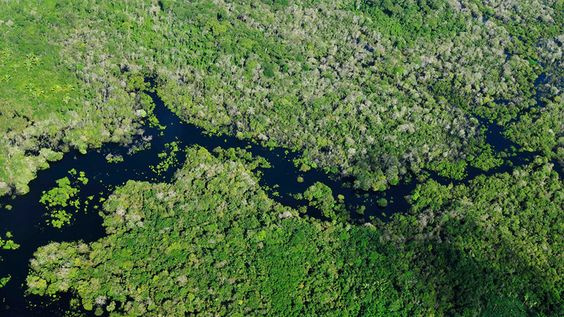 Aerial view of the Amazon Rainforest, near Manaus, the capital of the Brazilian…