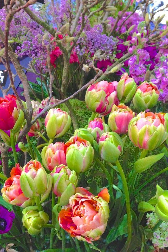 spring garden: