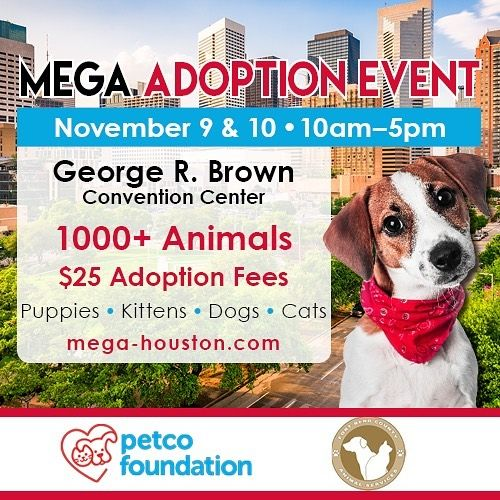 Megahouston Is Only 1 Day Away Come And Meet 1000 Animals All In One Place And All Available For Adopti With Images Most Beautiful Cat Breeds Kitten Lover Skinny Dog