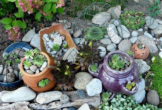 Guildwood Gardens...: More new hens & chicks - neue Dach Hauswurzen (Sempervivum tectorum)