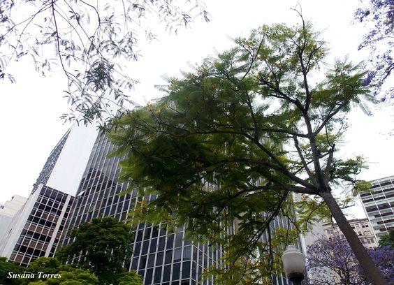 Praça da Alfândega, Proto Alegre-RS, Brasil