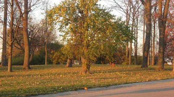 Mathew Mound in Hamilton County, Ohio.