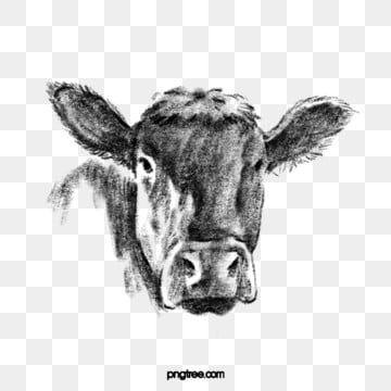 Gambar Gambar Garis Hitam Yang Ditarik Tangan Dari Kepala Sapi Ternak Kepala Banteng Tanduk Png Transparan Clipart Dan File Psd Untuk Unduh Gratis How To Draw Hands Dog Line Drawing Line