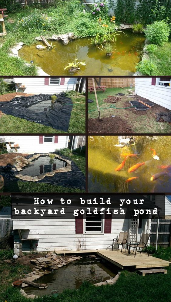 How to build your backyard goldfish pond How to build a goldfish pond