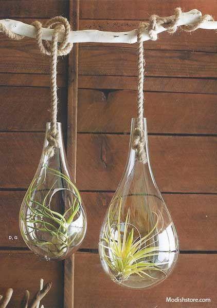 plant terrarium air hanging and more hanging terrarium recycled glass ...