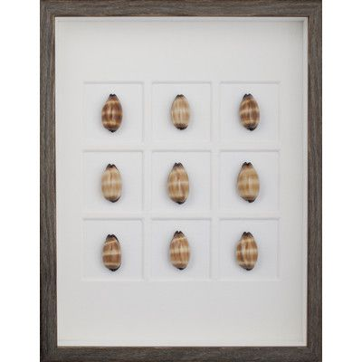 Mirror Image Home Mole Cowrie Shells Framed Graphic Art Frame Color: Brown