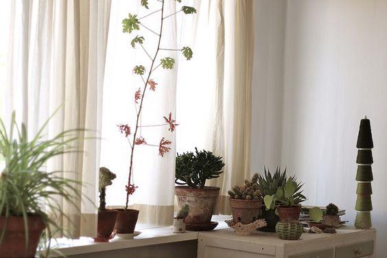Renilde Depeuter geranium, horntree, pelea, agave etc...