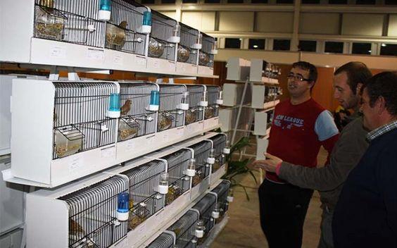 I Ibero Aves no Centro de Negócios até domingo