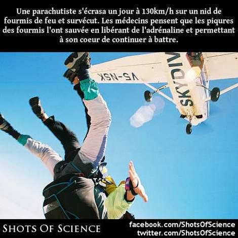 En savoir plus (en anglais) : https://en.wikipedia.org/wiki/Joan_Murray_(skydiver) Une parachutiste sécrasa un jour à 130km/h sur un nid de fourmis de feu et survécut. Les médecins pensent que les piqures des fourmis lont sauvée en libérant de ladrénaline et permettant à son coeur de continuer à battre.