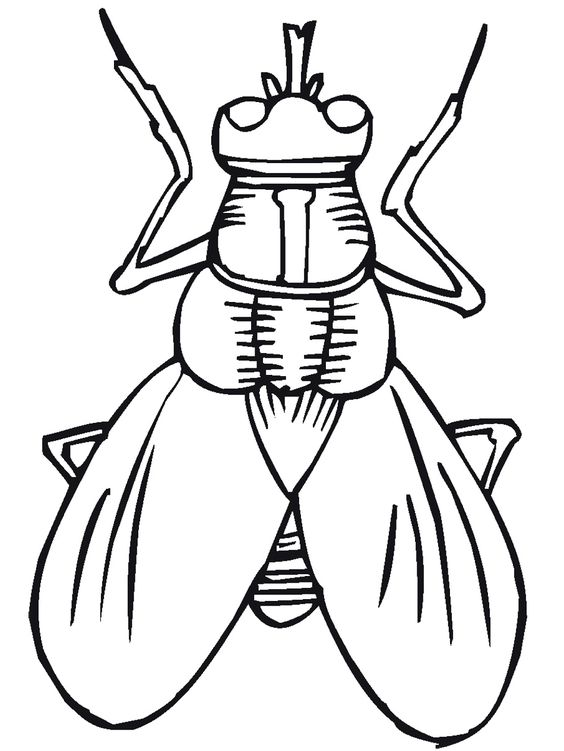 printable bugs bug insect coloring pages primarygames cool kid stuff pinterest