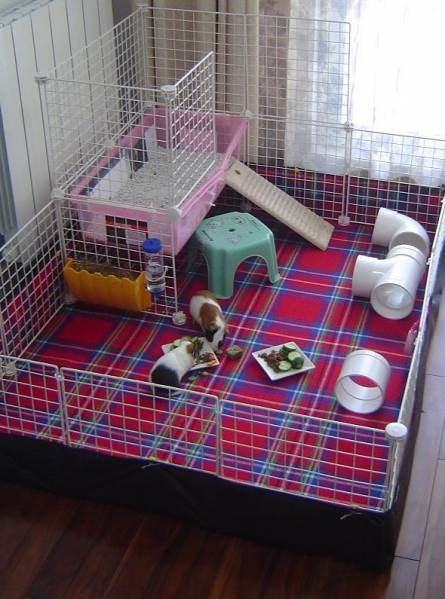 Cavy cage ideas whats up with everyone using c cages for Guinea pig cage for 3