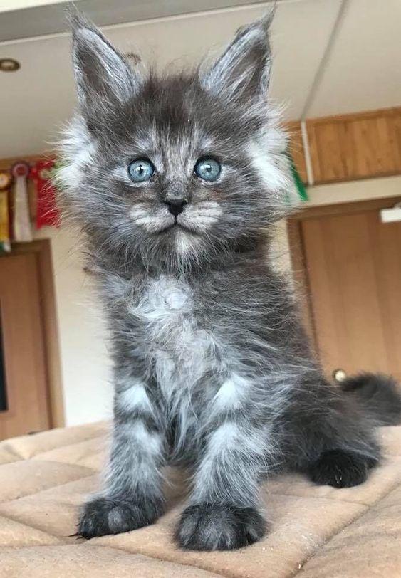 Pin Von Maria Anna Auf Katzen Bilder Baby Katzen Katzenbabys Katzen