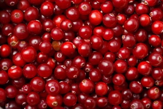 Check out this Wonder of the Day... Is It Thanksgiving Without Cranberries?