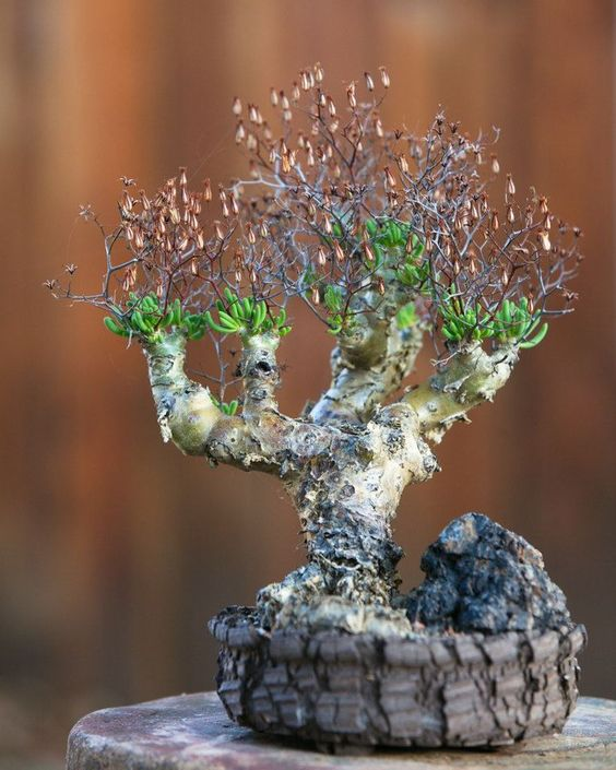 Taylors on pinterest for Unusual bonsai creations