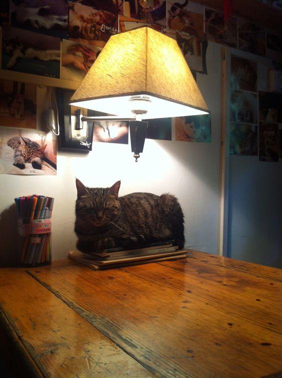 Black kitty on a desk.