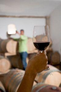 cata-vino-fase-gustativa-1