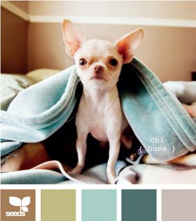 color: Color Inspiration, Living Room, Color Palette