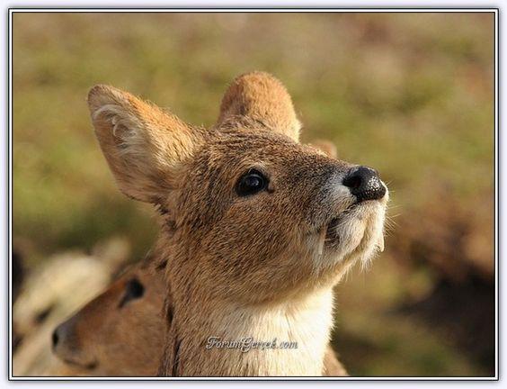 Dünyadaki İlginç Hayvanlar - Forum Gerçek