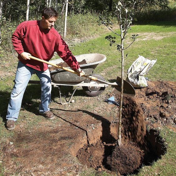 Backfill With the Dirt You Took Out of the Hole - Tips for Trouble-Free Tree Planting: http://www.familyhandyman.com/landscaping/how-to-plant-a-tree-that-will-thrive#7