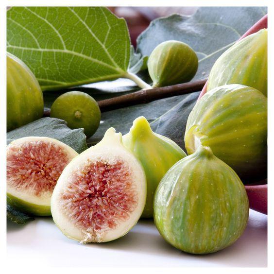 Por Mp Green Fig Garden Help Gardening Zones
