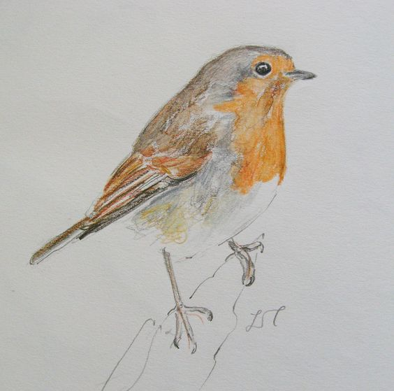 Sketchbook robin by Lisa Toppin.