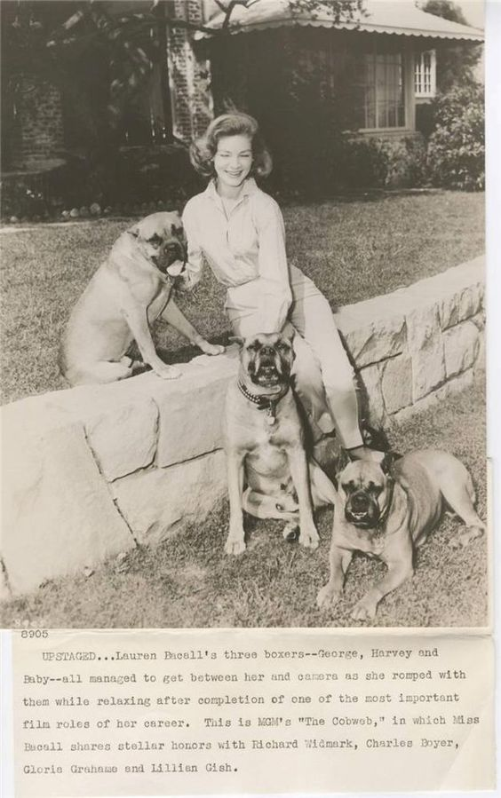 """""""THE COBWEB""""-ORIG STILL-NOIR-LAUREN BACALL-CANDID WITH BOXER DOGS-SNIPE"""