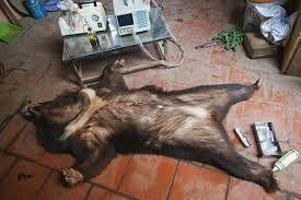 """""""野生动物非法交易""""的图片搜索结果"""
