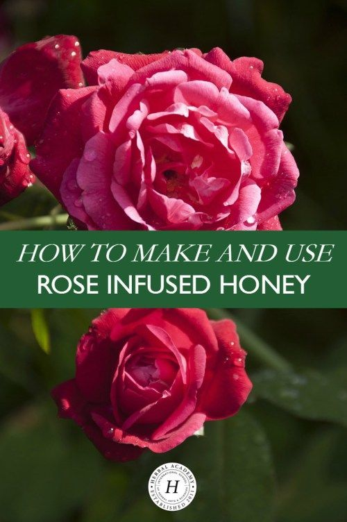How To Make And Use Rose Infused Honey Herbal Academy Herbalism Rose How To Make