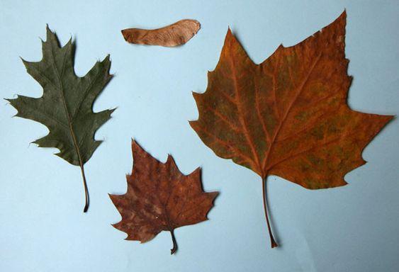 demi-feuilles-dessin-0