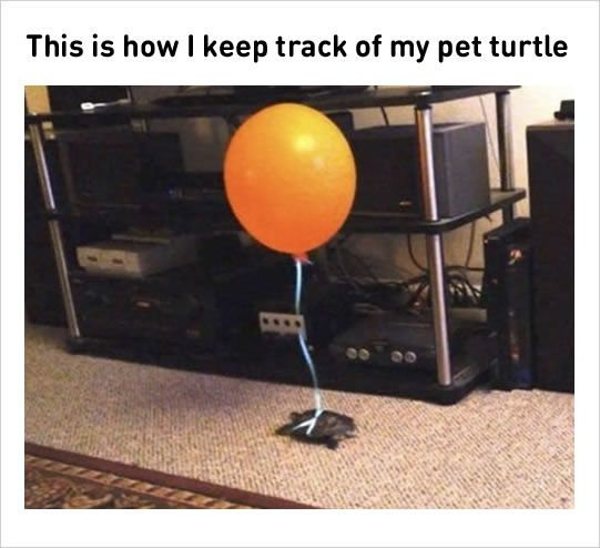 10 Memes Compilation Today 1 Nyc Studio Apartment For Rent Pet Turtle Funny Cute Hilarious
