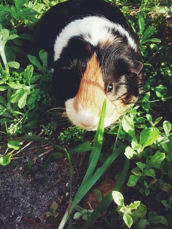 03/12/2015: Daisy is a sunbathing beauty!
