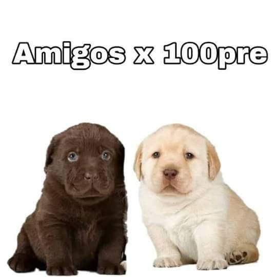 Pin De Valeria Acosta En Animals Memes Divertidos Memes Memes Perrones