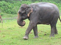Éléphant, Nature, Sauvage, La Faune