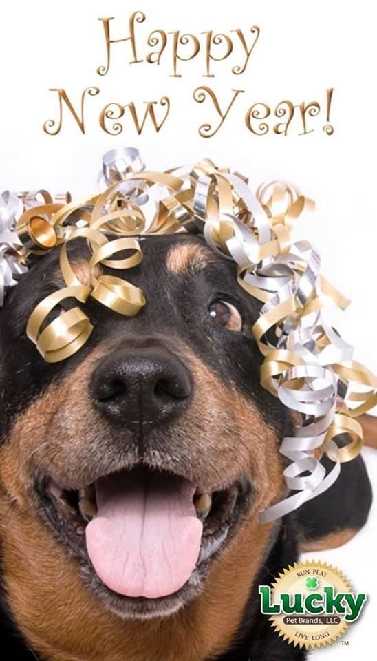 Christmas Rescue Dog Graphics 2021 Use For 2021 Happy New Year Dog Happy New Year Pictures New Year Pictures