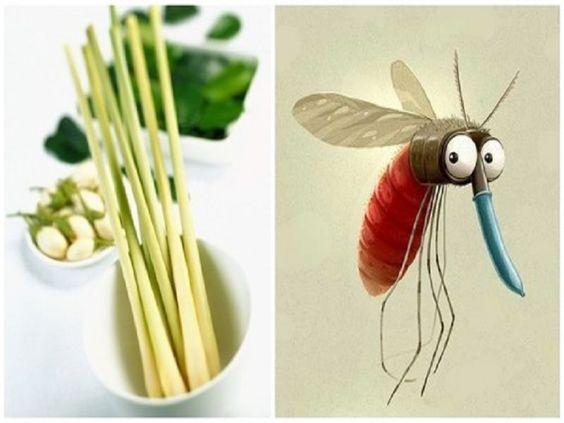 đuổi muỗi hiệu quả