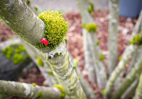 Pinteresting moss on tree branch