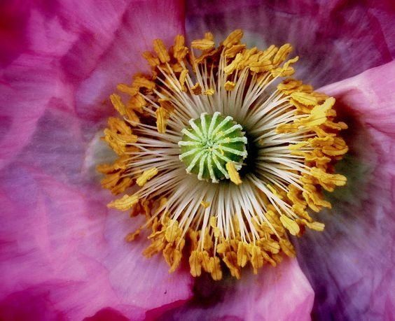 "Flowers whisper ""Beauty"" by Samrat Mukhopadhyay"