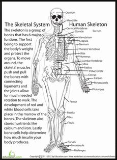 Printables Homeschool Science Worksheets human skeletal system the ojays anatomy and worksheets worksheet