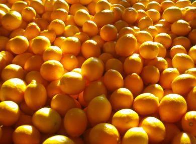 Lemon Ladies orchard - meyer lemons | Canning citrus | Pinterest ...