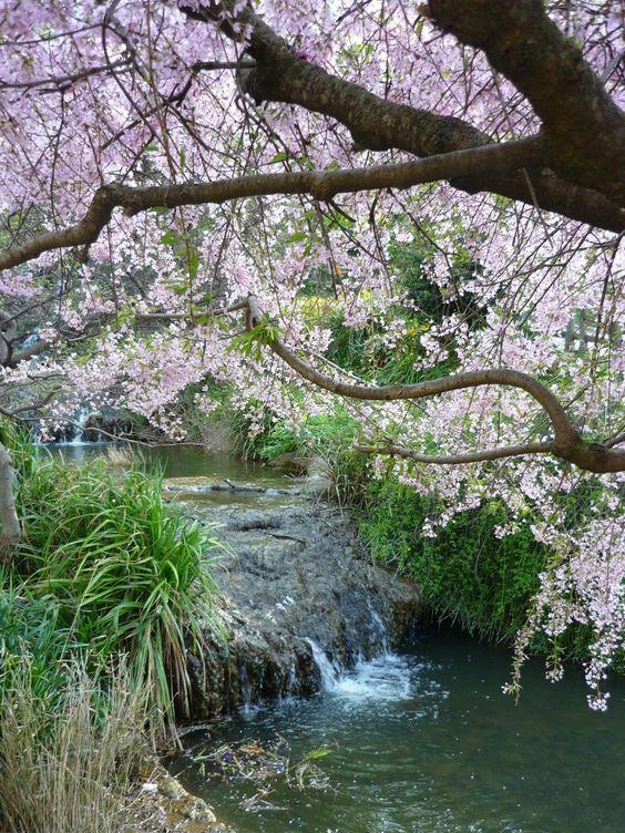 Cascade Parc Montsouris Le parc Montsouris est un jardin public situé dans le quartier du même nom, au sud de Paris, dans le 14ᵉ arrondissement. Pendant méridional du parc des Buttes-Chaumont, ce parc à l'anglaise aménagé à la fin du XIXᵉ siècle s'étend sur 15 hectares. Wikipédia: