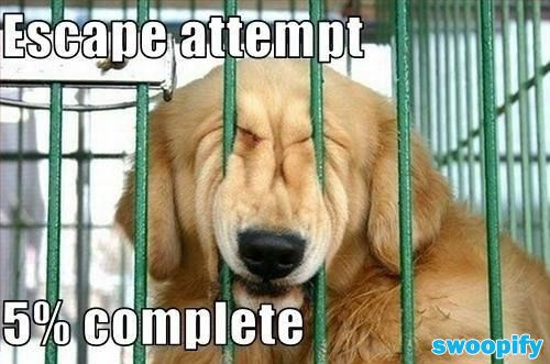 Escape Attempt At Only 5% #humor #lol #funny