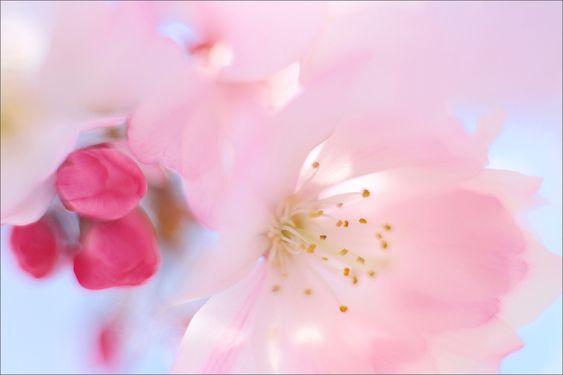 https://flic.kr/p/mwVDqk | Spring |    Spring