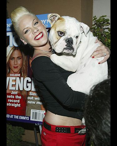 Pink's bulldog was named Elvis. She got from Lisa Marie Presley, daughter of rock and roll legend Elvis Presley.