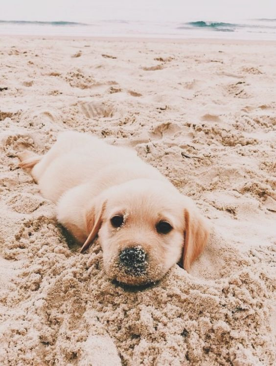Discover Golden Retriever Wallpaper In 2020 Cute Baby Animals Cute Dogs Cute Dogs And Puppies