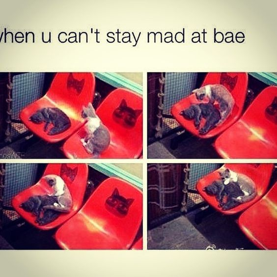 ... stay mad at bae love love quotes mad meme love sayings bae cute love