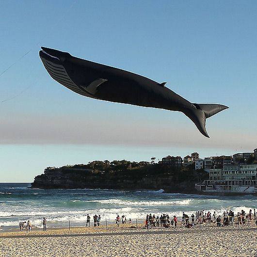 Amazing 100 ft blue whale kite!