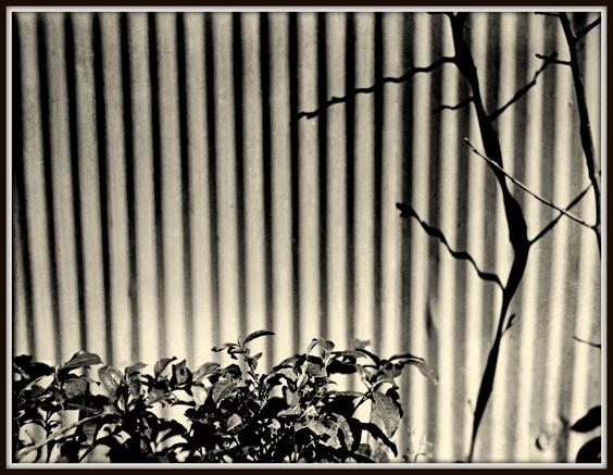 Kansuke Yamamoto c1935. ©Toshio Yamamoto