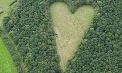 Aerial photograph reveals widower's secret heart-shaped tribute    Farmer planted oak saplings with romantically themed meadow in the middle that can only be seen from above: 6000 Oak, Fledgling Trees, Farmer Planted, Oak Trees, Shaped Tribute