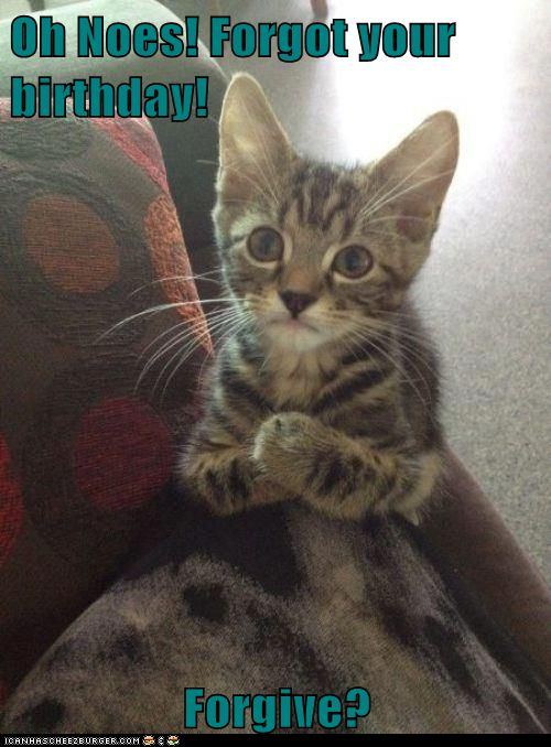 Pics For > Sorry Sad Cat
